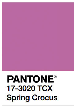 pantone color viola mauve moonlight cactus colors prickly pear cactus cactus plants purple