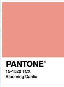 foto di Blooming Dahilia Pantone 15-1520 tcx